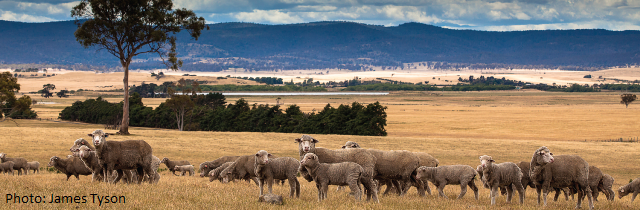 Sheep Connect Tasmania