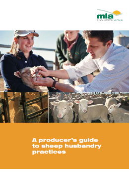 sheep_husbandry