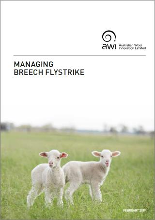 managing_breech_flystrike