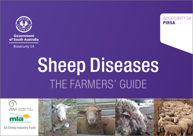 sheep_diseases